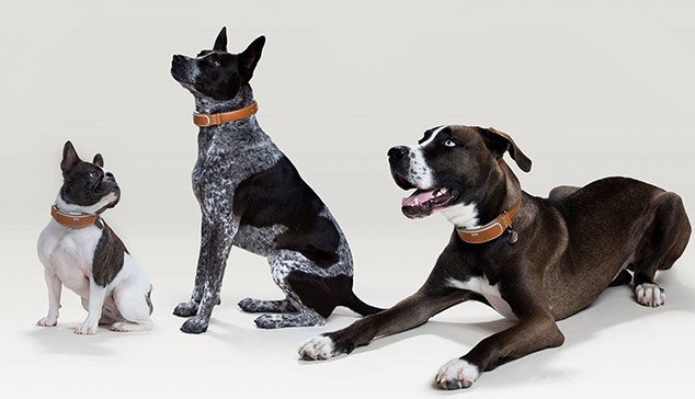 Award-Winning Smart Connected Dog Collar